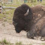 Yellowstone: consejos básicos e impresiones generales.
