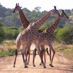 Sudáfrica: Preparativos y hoja de ruta.