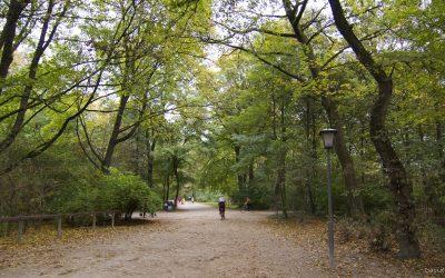 Múnich II: del ViktualienMarkt al Englishcher Garden