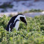Sudáfrica: la Península del Cabo