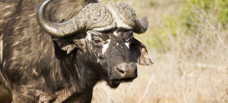 Parque Nacional Kruger: Lower Sabie
