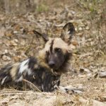 Parque Nacional Kruger: Pretoriuskop