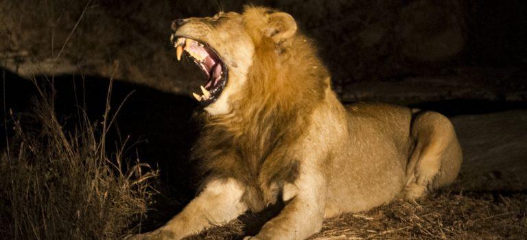 Parque Nacional Kruger: Skukuza