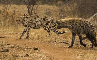 Guía para hacer un safari en Kruger