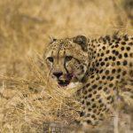 Parque Nacional Kruger: Olifants