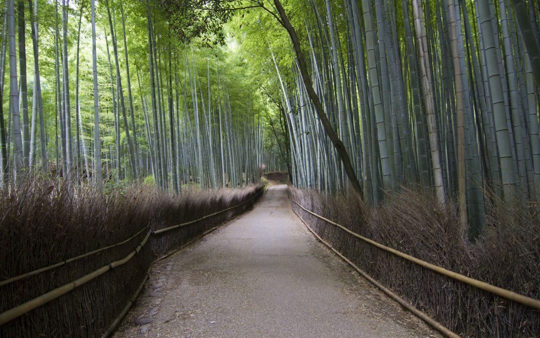 Kioto II: Arashiyama, Kinkaku-ji; Ryoan-ji, Nishiki Market y Pontocho.