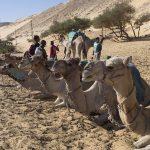 Egipto: visita a un poblado nubio.
