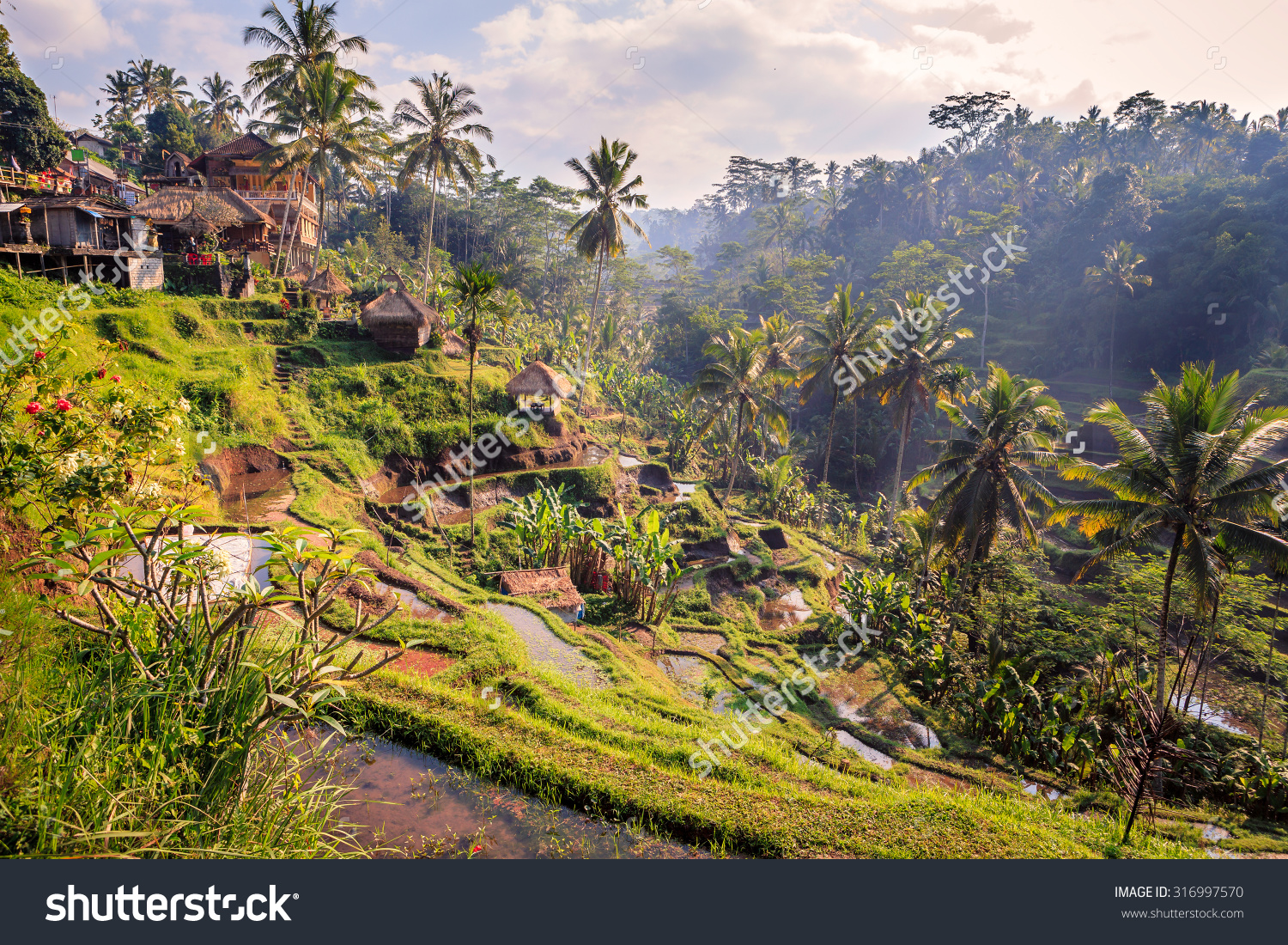 stock-photo-spectacular-rice-fields-in-the-jungle-and-the-mountain-near-ubud-in-bali-316997570