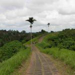 Qué ver en Bali: Ubud.