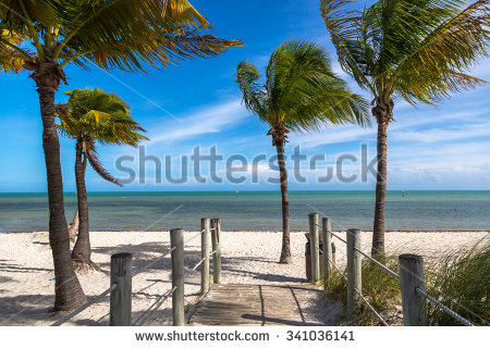 stock-photo-blue-sky-with-white-sand-and-palm-beach-in-key-west-usa-341036141