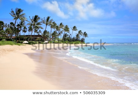 afternoon-on-poipu-beach-kauai-450w-506035309