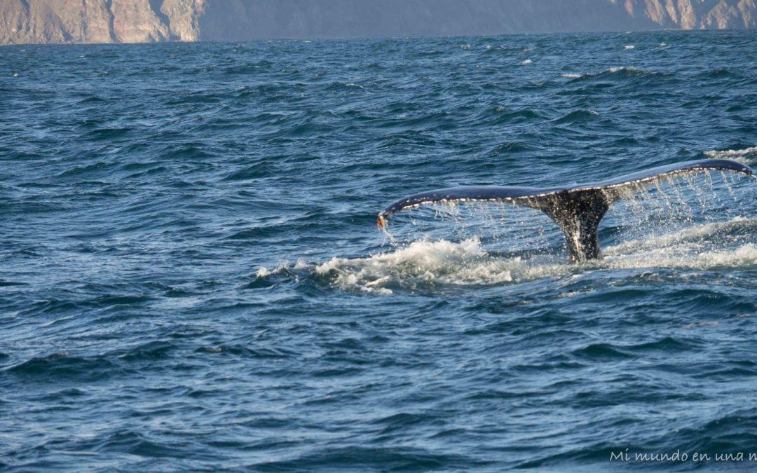 Islandia en 10 días: ballenas en Husavik, Dettifoss y aurora boreal en Egilsstadir.