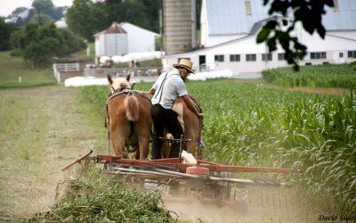 Lancaster: la región de los Amish.
