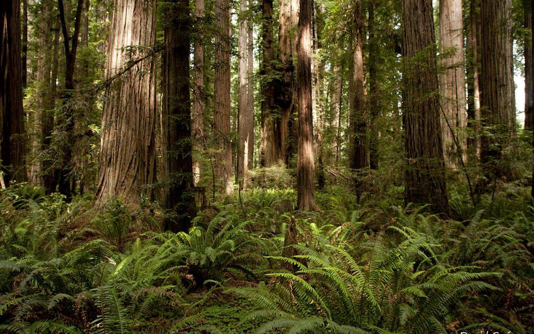 Redwood National Park y la costa del Pacífico