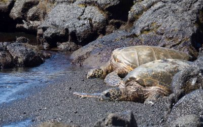 Qué ver y hacer en Big Island, Hawaii.